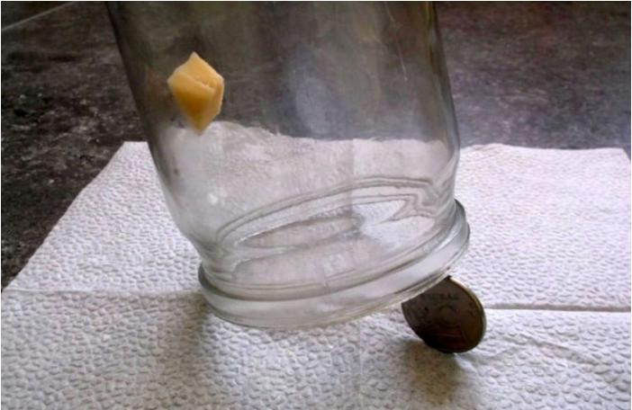 Самодельная мышеловка: простые ловушки для мышей своими руками