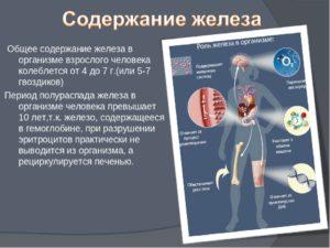 влияние железа н организм